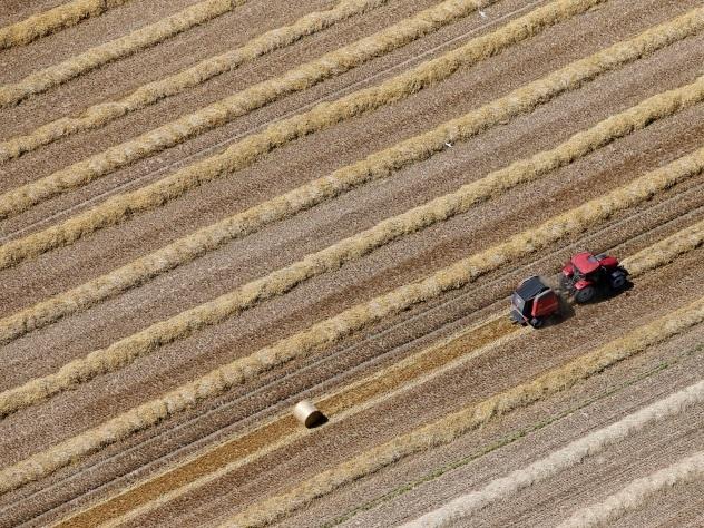 На субсидирование сельского хозяйства выделят 216 млрд рублей