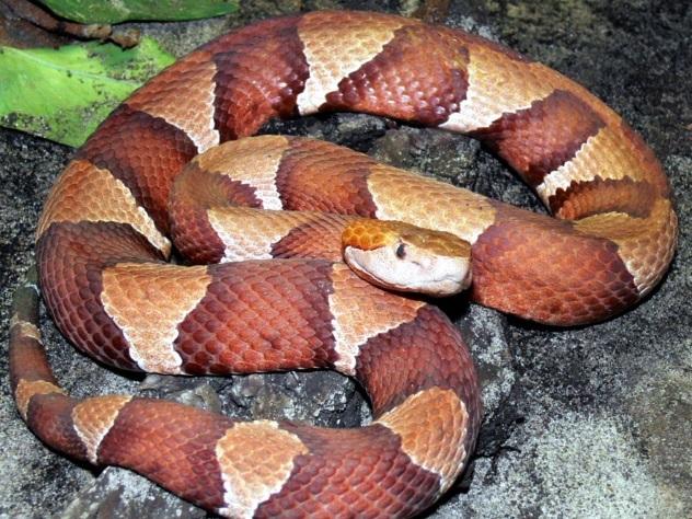 Втуалете офисного здания наСадовнической ловят змею