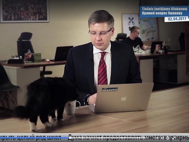 Кот прервал обращение главы города Риги к городским жителям