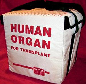 Перевозят драгоценный груз в специальных сумках-холодильниках