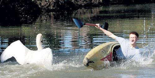 В родной стихии водоплавающая птица взяла верх над человеком