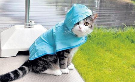 Жители районов, залитых дождями, точно не отказались бы поделиться ими в обмен на часть солнечного тепла