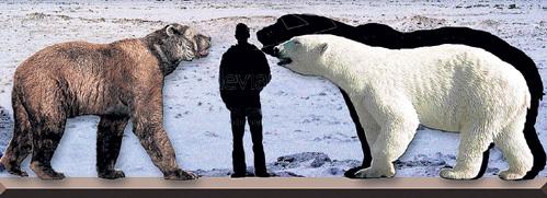 Гималайский зверь - это помесь полярного и бурого медведей