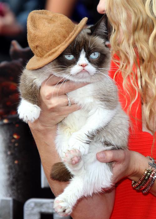 Угрюмый кот - специальный гость церемонии