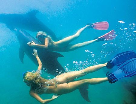 Если уж наслаждаться общением с дельфинами, то только в естественной для них среде - в море