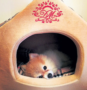 Домашний любимец - карликовый шпиц Пух в новом доме получил свой домик. Фото: Facebook.com