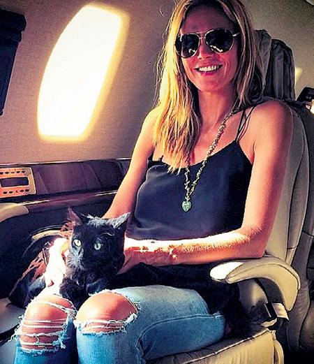 Кошка Хайди КЛУМ летает только на частном самолёте