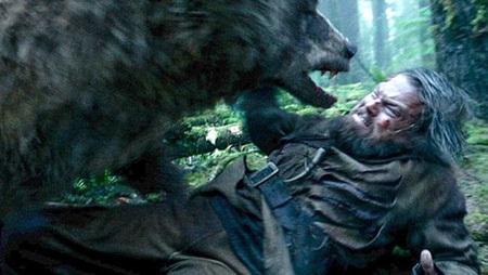 Сцена нападения гризли на героя ДИКАПРИО стала одной из самых зрелищных и противоречивых в фильме «Выживший». Некоторые озабоченные головы даже предположили, что хищник изнасиловал охотника. Пришлось режиссёру и Лео уточнять, что это была медведица