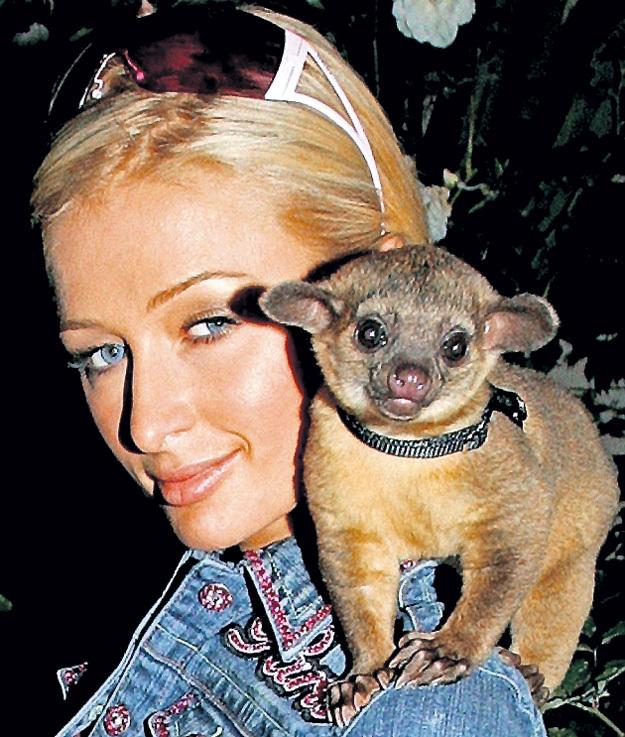 Медвежонку-кинкажу Пэрис ХИЛТОН дала кличку Бэбилав (BabyLuv), что в переводе со сленга означает «Дорогушечка»