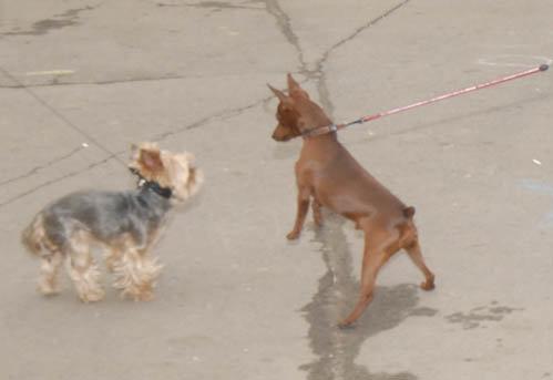Конеген всегда начинает переживать, как только к ее любимице Дусе (слева) приближается другая собака.