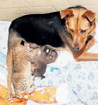 За сыночком-щеночком и приёмной дочкой нужен глаз да глаз