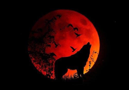 Картинки по запросу кровавая волчья Суперлуна