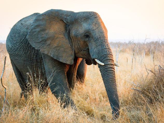 Взоопарке Гданьска слониха легла инесмогла встать