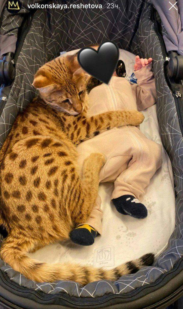 Сын Тимати с котом