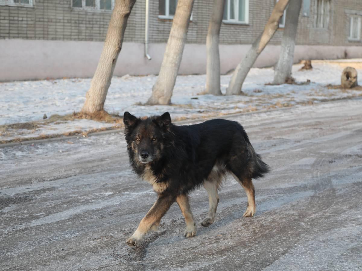 В Кузбассе годовалого ребенка загрызла домашняя собака